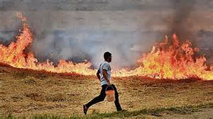 In two days, Punjab records over 100 incidents of stubble burning: Sikh Daily